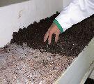 خاک پوششی مناسب برای پرورش قارچ09199762163