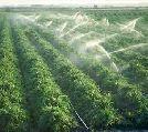 پیمانکاری امور زراعت و آبیاری