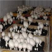 آموزشگاه پرورش قارچ